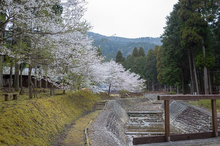 森のひととき 桜
