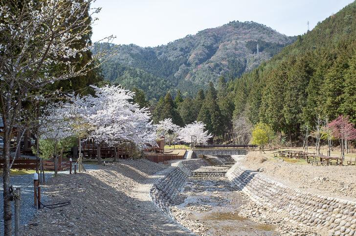 森のひととき 桜並木