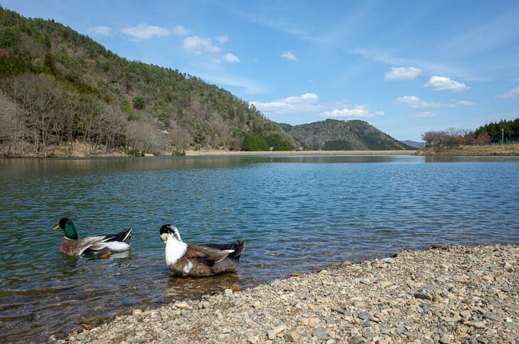 森のひととき 湖