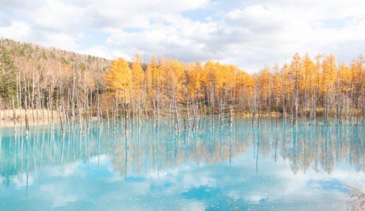 【北海道】美瑛の青い池はほんとに青い!行ってわかった観光のポイント