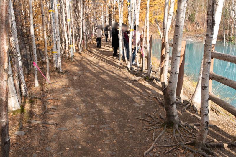 青い池の遊歩道